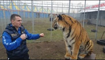 angelo-frank-trainiert-mit-tigern-und-nicht-mit-fiffi